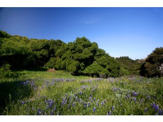 Property Photo - 285 EL CAMINITO RD (Carmel Valley)